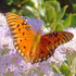 Volusia Butterflies and Moths icon
