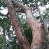 Plants of Guanaja icon
