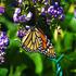 Mariposas de Honduras icon