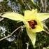 Orchidées sauvages de Mayotte icon
