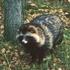 Mammals of Finland icon