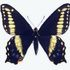 Utah Butterflies icon