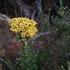 Waverley Flora Park icon