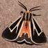 Lepidoptera of Alachua Co., Florida icon