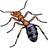 Ants.24