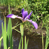 Michigan Botanical Club 2017 Spring Foray icon
