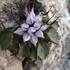 Flora e fauna nel gruppo delle Grigne icon