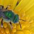 Pollinator Palooza Bioblitz 2017 icon