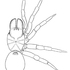 Mygalomorph Spiders of the California Floristic Province icon