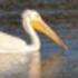 Palo Alto Baylands Bioblitz icon