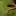 Bolitoglossa platydactyla mdl