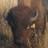Bisonte portada