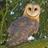 Owl icon (640x640)