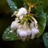Huckleberry Botanic Preserve Monitoring icon