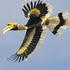 Birds of Phang Nga icon