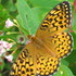 KIllarney's 16th Annual Butterfly Count icon