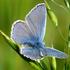 PAPILIO - Mariposas diurnas de España / Day butterflies of Spain (Papilionidea) icon