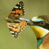 Mariposas y aves / Butterflies and birds icon