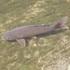 Fish of the LA River - Peces del Río de Los Angeles icon