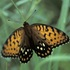 Lepidoptera of Nebraska icon