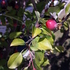 Plant Diversity around GHHS icon