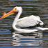 Oakland High School Lake Merritt Bird Survey icon