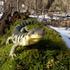 Amphibian Resuce icon