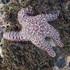 Intertidal Biodiversity Survey at Pillar Point icon