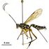 NZ wasps, ants, bees and parasitoids (Hymenoptera) icon