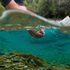 Freshwater Habitat icon