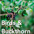 Birds and Buckthorn icon