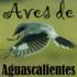 Avifauna del Estado de Aguascalientes y alrededores icon