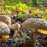 JSHS AP Bio Fungi icon