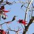 aves del estado de Oaxaca icon