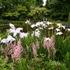 Ayrlies Garden icon