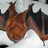 I b27e55cc3fe4ad5ea15a2fc86709a2f7 lasiurus borealis red bat usgs wikipedia april 2011