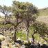 Biodiversidad del Volcán Auca Mahuida icon