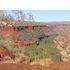 4WD travels Australia - wildlife record icon