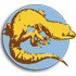 Global Reptile BioBlitz icon