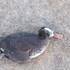 Aves muertas icon
