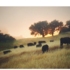 Holistic Ag Pepperwood Grazing Observations icon