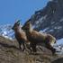 La fauna del Monte Rosa icon