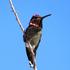 Birds of Joshua Tree National Park icon