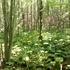 SNHU Arboretum icon