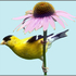 Virginia Wildlife Mapping icon