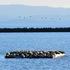 Alameda Point Harbor Seals icon