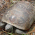 Florida Gopher Tortoise icon