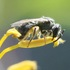 Bees of San Diego County icon