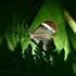 Lepidópteros de Veracruz icon