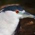 Birds of Ventura County icon